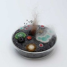 Petri dish Bacteria art Mouldy petri dish No 21 limited by elinart