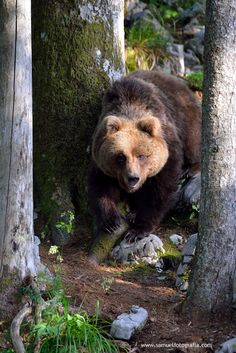 Wouldn't want to meet this guy on a trail.