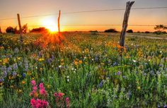 97 Best Cleburne Texas Images In 2019 Cleburne Texas