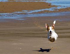 Flying along on the beach.