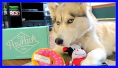 HUSKY WILL NOT SHARE | PawPack UnBoxing 39