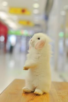 Animals beautiful, cute baby animals, funny animals, animals and pets, Bunny Love, Cute Bunny, Bunny Bunny, Easter Bunny, Cutest Bunnies, Bunny Rabbits, Funny Bunnies, Cute Baby Animals, Animals And Pets