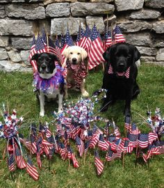 Happy Independence Day! Nia, Tawny, and Tony surrounded by American flags on the lawn of the Reynolds Mansion in Bellefonte.