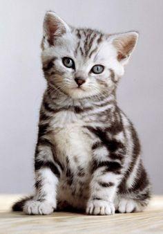 Cuki Warrior Cats, Cute Cats, Kitty, Animals, Gatos, Cats, Pretty Cats, Little Kitty, Animales