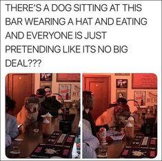 Gagzilla's Dump of The Day – 75 Pics Funny Animal Memes, Funny Animal Pictures, Cute Funny Animals, Cute Baby Animals, Funny Cute, Really Funny, Animal Pics, Funniest Animals, Animal Humor