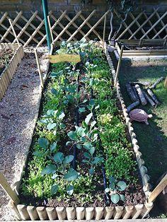 L'orto urbano di Renato realizzato da OrtoGenuino #ortiurbani #organicfood #bio #vegetable #vegetarian #organicvegetables #urbanfarming #mygarden #ortogenuino #km0 #metri0 #orto #lanificio #roma