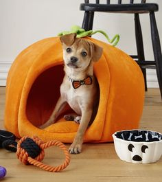 "Peak-a BOO! Let your best friend ""carve"" out their own fall fun with a #pumpkin bed from #MarthaStewartPets only at petsmart.com."