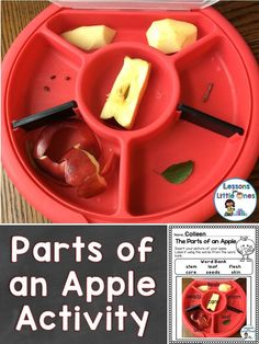 Parts of an apple sc