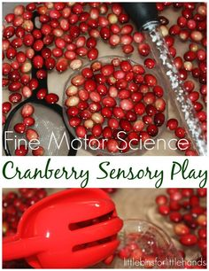 Cranberry science for sensory play and fine motor skill practice. Thanksgiving means bags of cranberries are out! Grab a bag and check out what you can do!