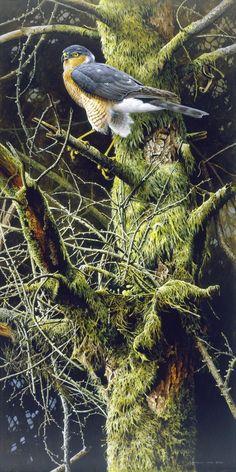Wildlife Paintings, Wildlife Art, Animal Paintings, Watercolor Landscape, Watercolor Art, Beautiful Birds, Animals Beautiful, Raptor Bird Of Prey, Fall Clip Art