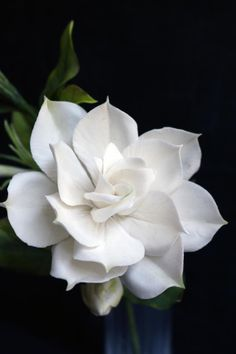 I just loooooved making these flowers ! Something about Gardenias is sooo elegant and classy .And their fragrance is heavenly ! One of my favorite flowers smile emoticon Exotic Flowers, Pretty Flowers, Colorful Flowers, White Flowers, White Roses, Sugar Flowers, Paper Flowers, Flor Tattoo, Floral Photography