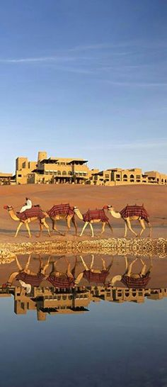 Could you see me riding camels in Abu Dhabi like the Sex in the City girls ?