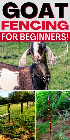 Are you new to raising goats and feel unsure about making a goat pen and fencing in a goat pasture? Here's the complete guide to goat fencing so that you can feel safe knowing your goats will stay where they should! Goat Fence, Pasture Fencing, Feeding Goats, Raising Goats, Homestead Survival, Survival Skills, Happy Goat, Goat Care, Livestock Farming