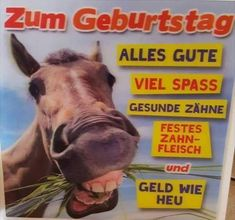 Pferd Alles Gute Zum Geburtstag Happy Birthday Geburtstag