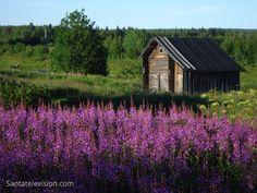 Kesämaisema Kittilässä Suomen Lapissa