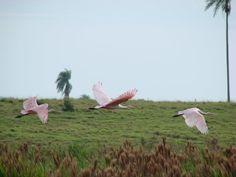 preservação ambiental Green, Animals, Animales, Animaux, Animal, Animais
