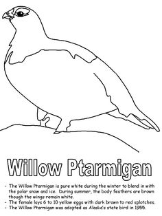 Florida state bird coloring pages ~ map of florida outline - Google Search | Art Journal ...
