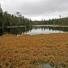 Autumn has arrived in the swamp, Kuusamo Aili Alaiso Finland