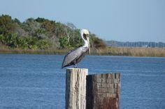Apalachicola, Florida by KairoKittyKat, via Flickr