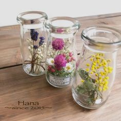 Dried And Pressed Flowers, Dried Flowers, Paper Flowers, Glass Bottles, Glass Vase, Flower Bottle, The Bell Jar, Flower Crafts, Bunt