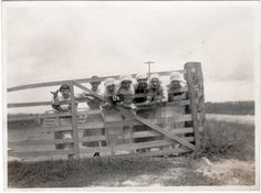 Vintage Photo    Edwardian Fence Girls  farm by photopicker