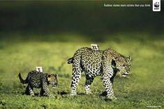 campaña leopardo - wwf