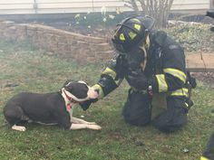 Raja's owner says that he saved her life by alerting her to a fire.(Photo Provided/IFD)