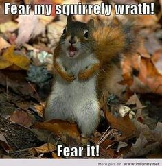 Nah, you're not scary. Just entertaining. We're too busy glory grabbing. No time for nuts!