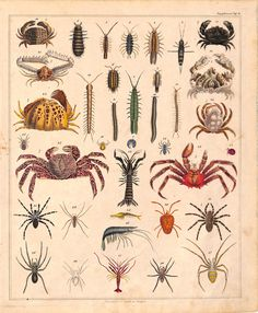 Crabs, Spiders, Insects, Centipedes