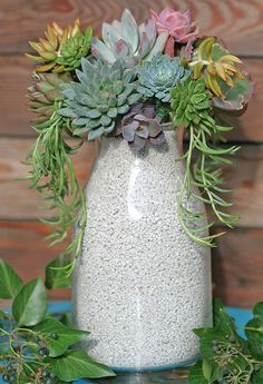 Beautiful container arrangement.  The simple container takes nothing away from the succulents