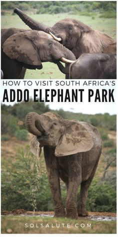 How we spent our two days of Addo Elephant Park safari, where to stay and how to best spend your time in this national park in South Africa. South Africa Wildlife, Visit South Africa, Elephant Park, Africa Destinations, Travel Destinations, Cultural Experience, African Safari, Africa Travel, Trip Planning
