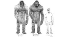 Neo-Giant is a term coined by Ivan T. Sanderson for Giant hominids, including the Dzu-teh, Bigfoot, Sisemite, and Mapinguari. It is also the name Mark Hall uses to distinguish Bigfoot from the Taller hominid and True giant. Sanderson considered a surviving Gigantopithecus the most likely candidate, while Hall thought Paranthropus more likely.