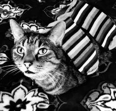 cat wearing socks