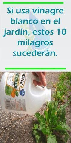 Si usa vinagre blanco en el jardín, estos 10 milagros sucederán.