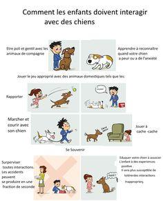 comment les enfants doivent interagir avec les chiens ?