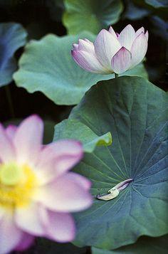 蓮   Explore yocca's photos on Flickr. yocca has uploaded 474…   Flickr - Photo Sharing!