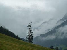Titelbild zu Regenwetter-Ausflugsziele im Allgäu - Baum hinter der Erdinger Arena mit tief hängenden Regenwolken