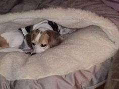 i have 4 dogs and 2 snoozers they love being in them and i cozy cave - Cozy Cave Dog Bed