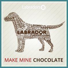Labrador Retriever T-Shirts, Hoodies & I Love Dogs, Puppy Love, Chocolate Labrador Retriever, Cavachon, Brown Dog, Big Brown, Dog Art, Mans Best Friend, Dog Life