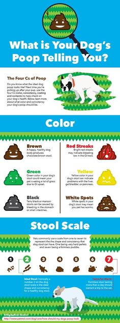 What can your dog's poop tell you about his health? How Often Should You Clean Up Dog Poop Diarrhea In Dogs, Dog Diarrhea Remedy, Dog Health Tips, Pet Health, Health Care, Dog Information, Info Dog, Up Dog, Cute Kittens