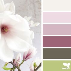 SnapWidget   today's gorgeous inspiration photo for { flora tones } is by the talented @c_colli ... thank you Cristina for generously sharing your work in #SeedsColor !