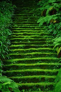 Moss in temple stairs 鎌倉妙法寺 Myoho-ji Temple, Kamakura, Japan Kamakura, Beautiful World, Beautiful Places, Beautiful Scenery, Beautiful Beautiful, Wonderful Places, Japan Photo, Stairway To Heaven, Color Of Life