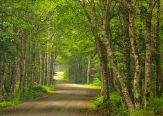 A Road Taken in New Brunswick, Canada