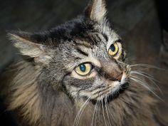 "Alliance to Host ""Strictly Seniors"" Senior Cat Adoption Event on May 4"