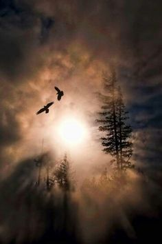 Dance of the Ravens by Mark Lissick.