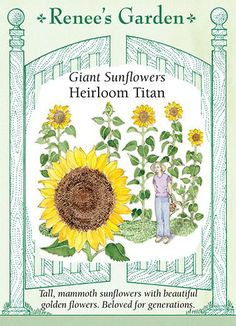 Sunflower Titan by Renees Garden Seeds ** Details can be found by clicking on the image. (This is an affiliate link) Garden Soil, Garden Seeds, Garden Plants, Gardening, Vegetable Garden, Mammoth Sunflower, Giant Sunflower, Sunflower Types, Golden Flower