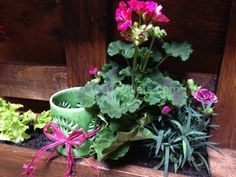 Mini Jardin En Palette / Pallet Mini Vertical Garden