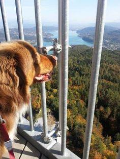Carinthia, Slovenia, Austria, Corgi, Country, Diversity, Animals, Beautiful, Pets