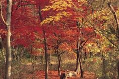 deciduous forest biome facts