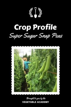 Take your vegetable game to the next level with professional advice and the support of a like minded community. Online Classroom, Seed Catalogs, Sugar Snap Peas, Classroom Community, Grow Your Own Food, The Hard Way, Fresh Vegetables, Gardening Tips, Finding Yourself